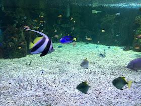 Scarborough Sea Life