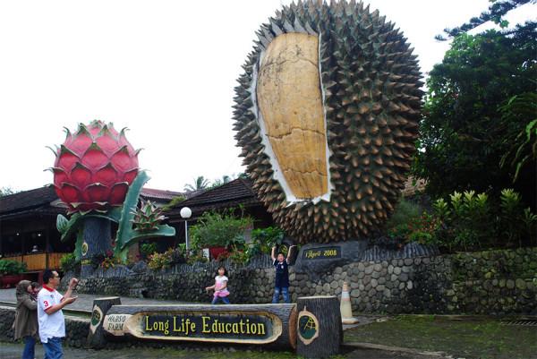 Menikmati durian dan agrowisatanya di Warso Farm Bogor