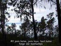 #2 jenis hutan, jenis kayu, hasil hutan, fungsi dan manfaatnya