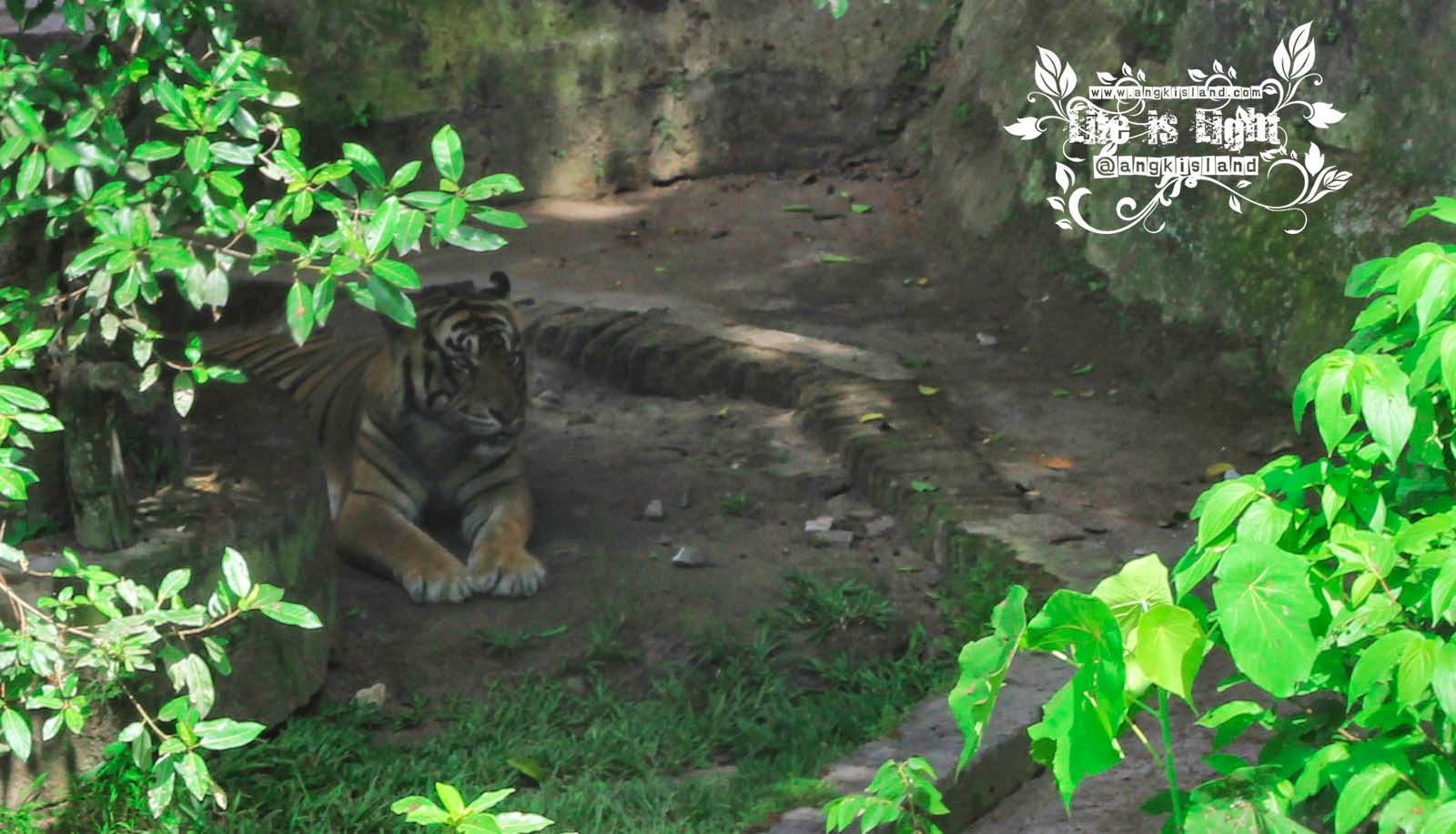 harimau Gembiraloka