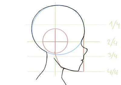 dessiner le nez de profile