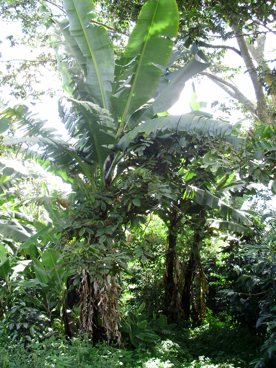 gualaca women Below you will find a little selection of our unique costa rica farm and mountain real estate listingproperties in costa rica real estate listings include the most beautiful farming areas and homes for sale in the mountains of costa rica.