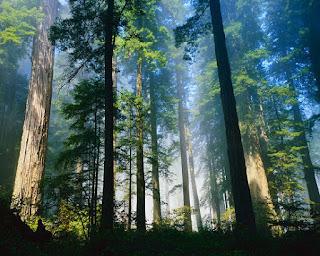 hutan hujan tropis di Indonesia