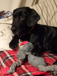 cute dog with her teddy