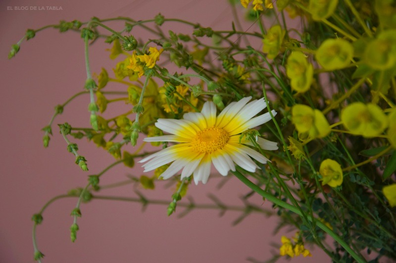 Glebionis coronaria -antes Chrysanthemum coronarium-   (margarita silvestre)