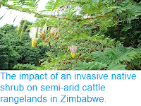 http://sciencythoughts.blogspot.co.uk/2014/11/the-impact-of-invasive-native-shrub-on.html