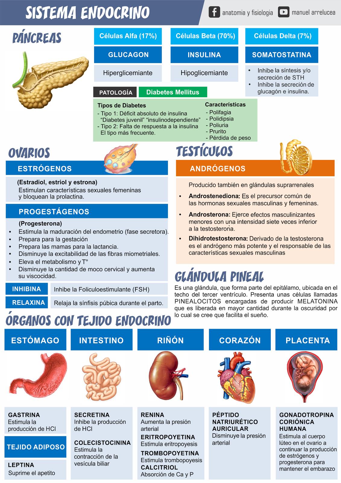 Anatomía y Fisiología: RESUMEN DE SISTEMA ENDOCRINO