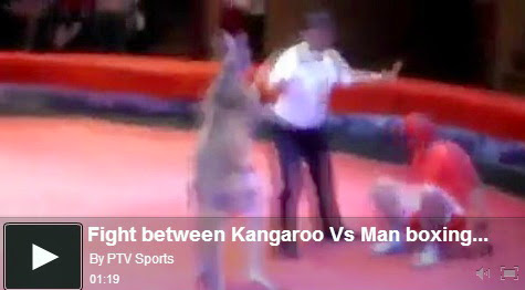 http://funkidos.com/videos-collection/mix-videos/fight-between-kangaroo-vs-man