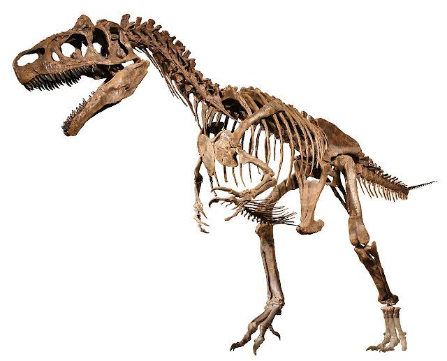 alozaur schelet