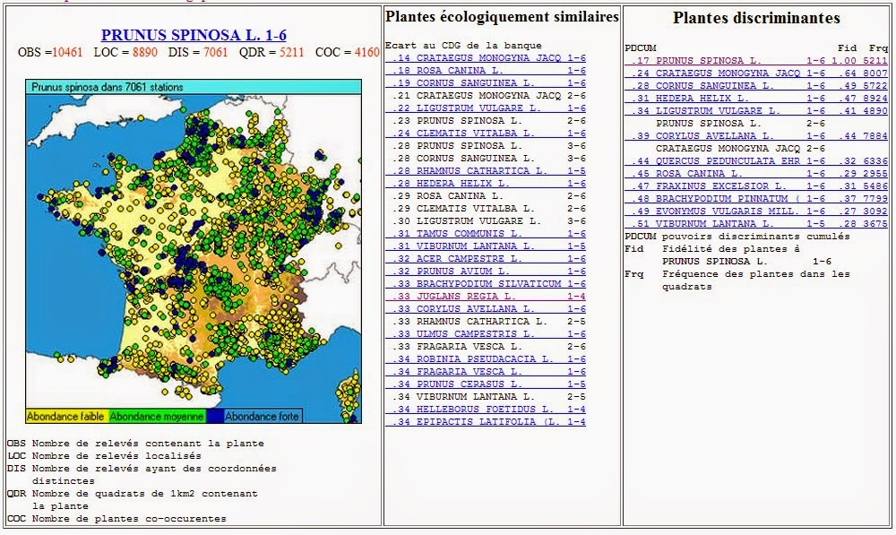 phytotype%2Bprunus%2Bspinosa.