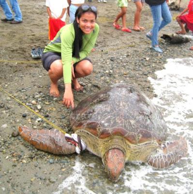 green sea turtle, Marinduque