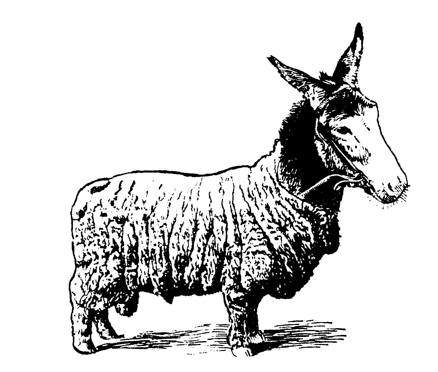 Lettre A : Ânabécédaire (un abécédaire paru dans le Midi