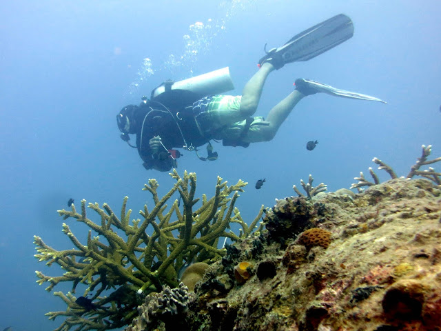 South China Sea, Malaysia, tioman island, diving, hard corals