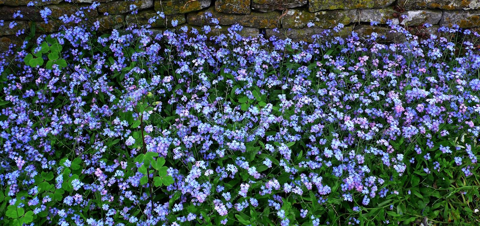 Share My Garden May 2012