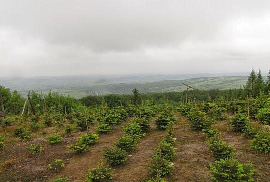 Pogórze Jasielskie widziane z Łysej Góry.