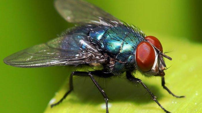 6 Cara Alami Mengusir Lalat, Insya Allah Ampuh