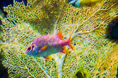 Tropical fish IV
