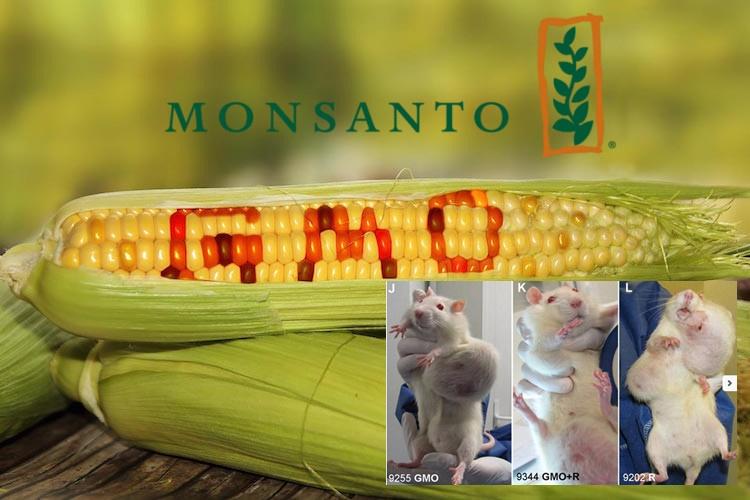 Herbicida mais vendido no Brasil envenena água potável, envenena população