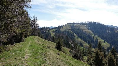 Trail zwischen Ahorn und Scheidegg