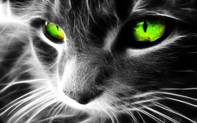 КОТ - защищает вас и ваш дом от призраков и отвратительных духов!