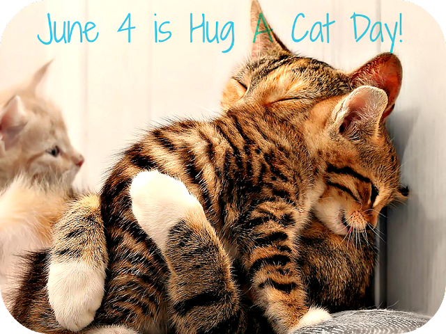 hugging cats