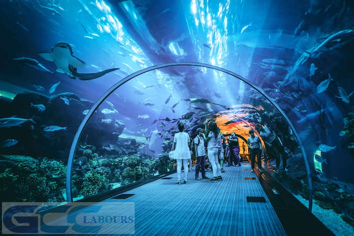 dubai aquarium offers, dubai aquarium timing, dubai aquarium facts, dubai aquarium credit card offers