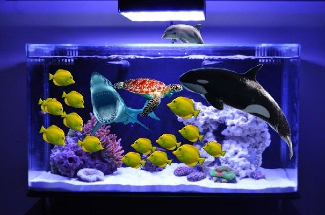 Gambar Ikan dalam Aquarium