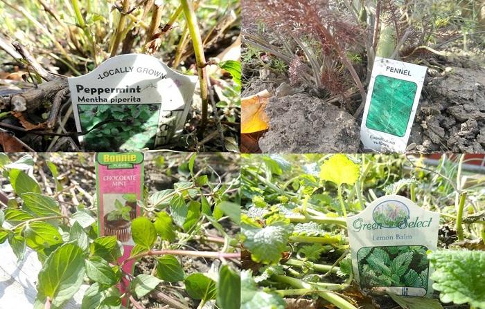 #diy #hierbassecar #comosecarhierbas #hierbas #menta #hinojo #balsamolimon #labrandounhogar