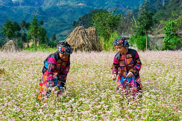 Beauty cultural identity of ethnic Hmong in Ha Giang 5