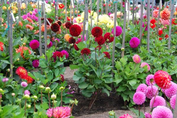 Tips Merawat Bunga Agar Tidak Layu