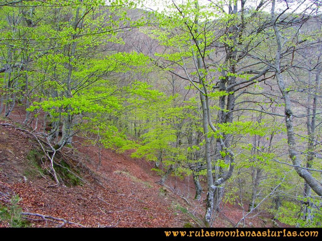 Ruta Peña Redonda: Hayedo en el camino