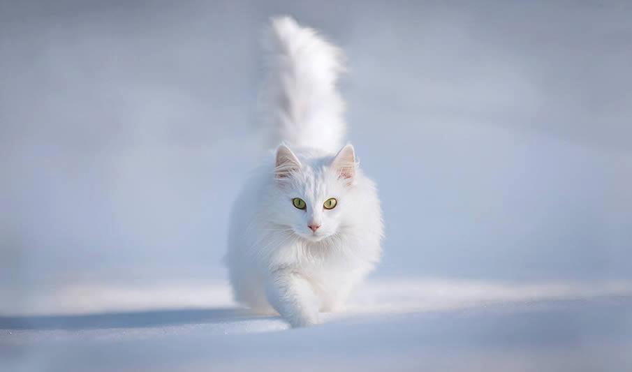 Imágenes Gatitos