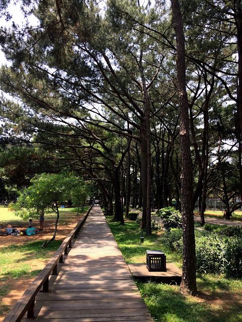 百花川松林步道