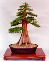 Bonsai Tree Types and General Care | Ultimate Guides