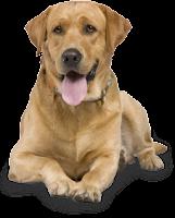 Cachorro elegante png