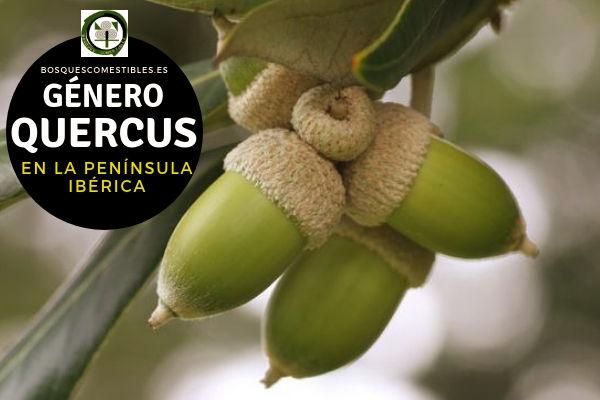 Lista de especies del Género Quercus, Robles y Encinas, Familia Fabaceae en la Península Ibérica.