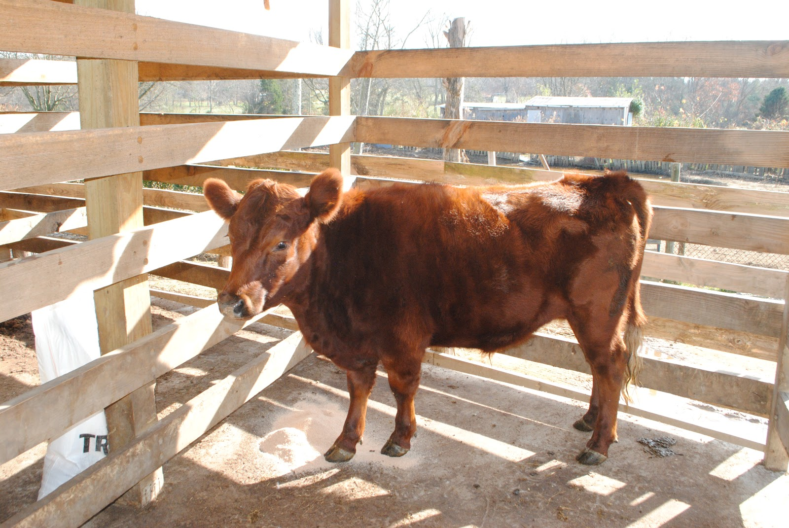Adventures on Zephyr Hill Farm: The Cost of Raising a ...