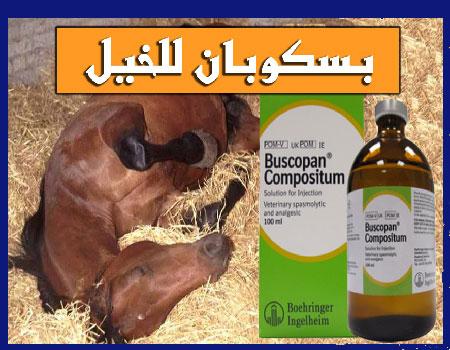 بسكوبان للخيل buscopan horses