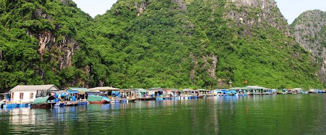 Visit Halong bay by bamboo boats 2