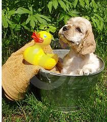 cães e o banho