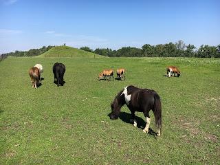 Galiny, Puola, Horsexplore