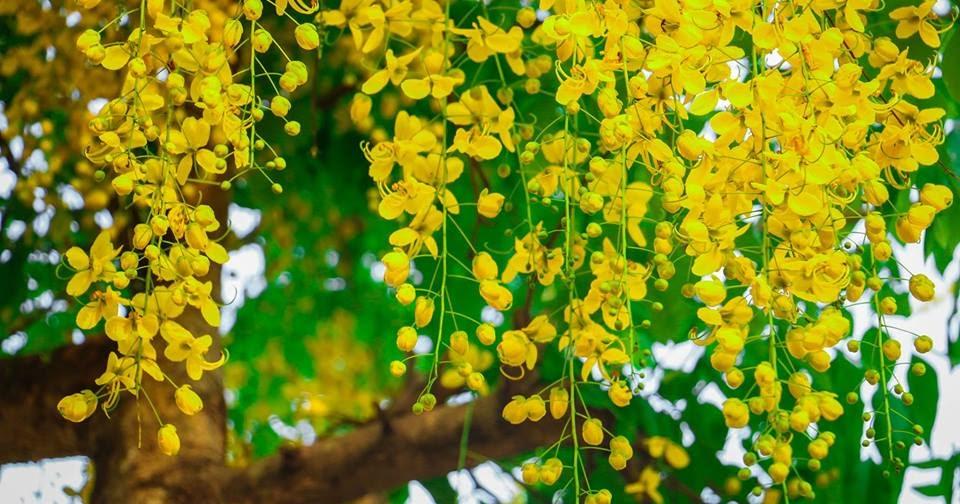 New Year Festival in Kerala - Vishu