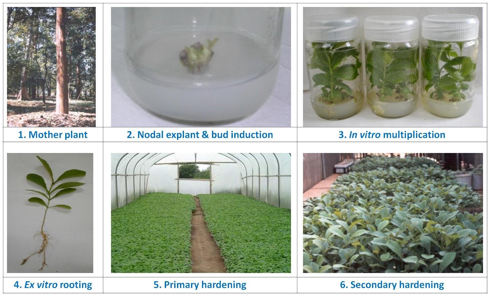 Unnat Bio Technologies-Tissue Culture Teak And Plantation