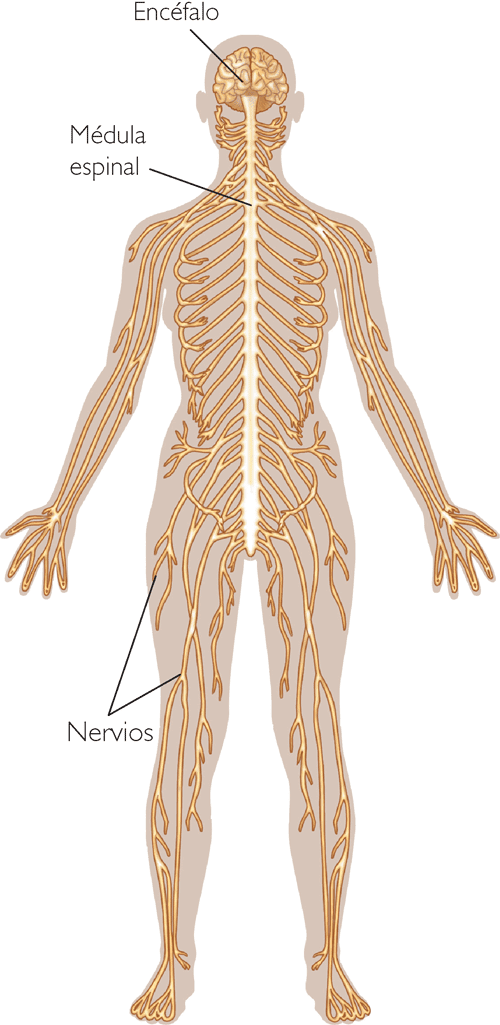 El dibujo sensitivo y expresivo de la figura humana cfnm - 4 7