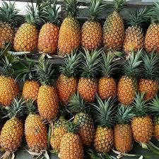 buah nenas dari kecamatan sipahutar