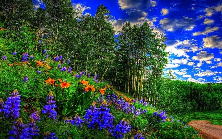 ormanda açan çiçek manzara resimleri