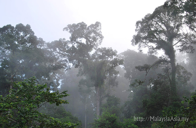 Rainforest in Sabah Photo