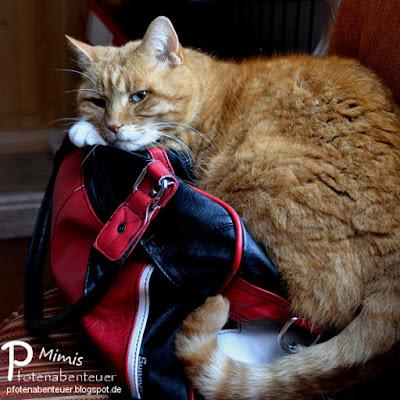 Katze Mimi bewacht ihre rote Lieblingstasche