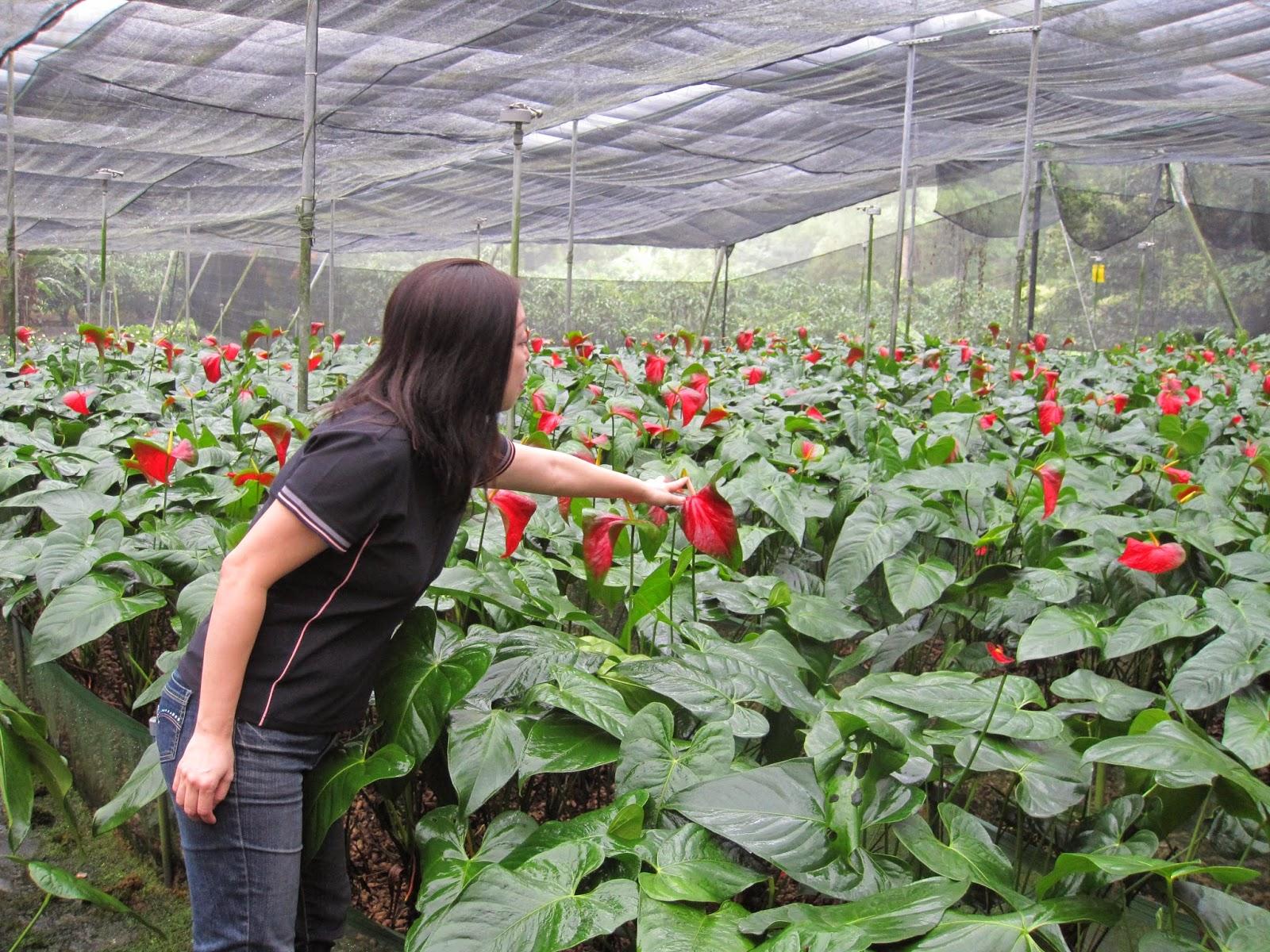 Estudiando agricultura en taiw n c scara de man for Jardines de anturios