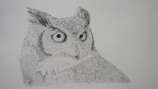 Great horned owl, pencil & charcoal on bristol drawing